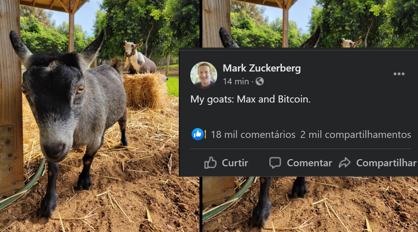 Zuck Max Bitcoin بز مارک زاکربرگ بیت کوین نام دارد!
